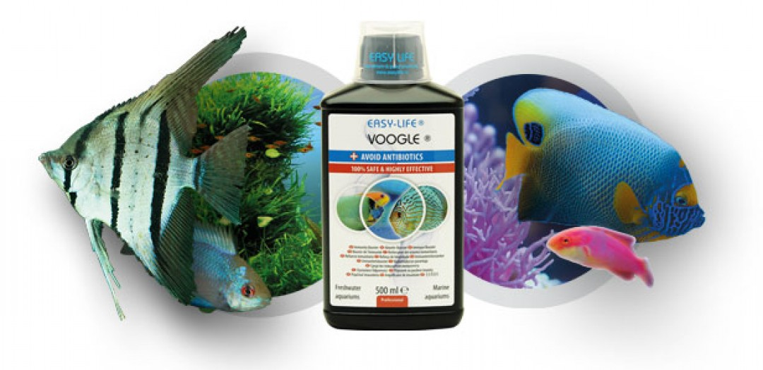 Voogle: the new way - Easy-Life