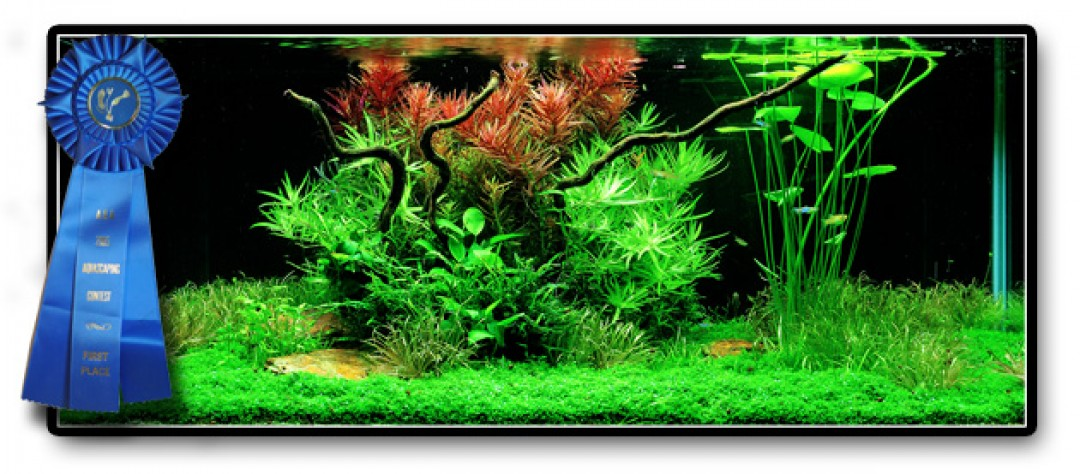Easy Life Aquascaping Aga Easy Life
