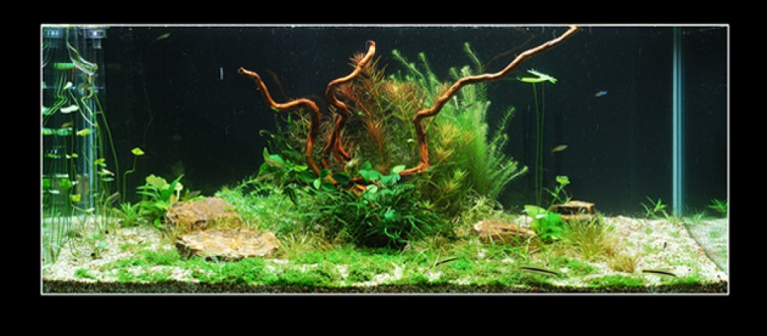 After Finding The Right Stones And Wood (in About 2 Months!), It Was Time  To Decorate The Aquarium Otherwise. Pay Attention: The Use Of Wood And  Stones Is ...
